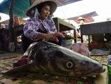 Рыбный рынок / Вьетнам