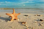 Морские звезды / Филиппины