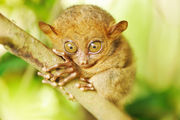 Жемчужина Бохола / Филиппины
