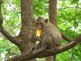 Кормили диких обезьян / Таиланд