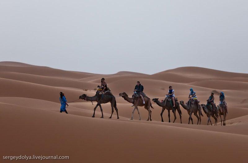 Верблюды в пустыне Сахара, Марокко / Фото из Марокко