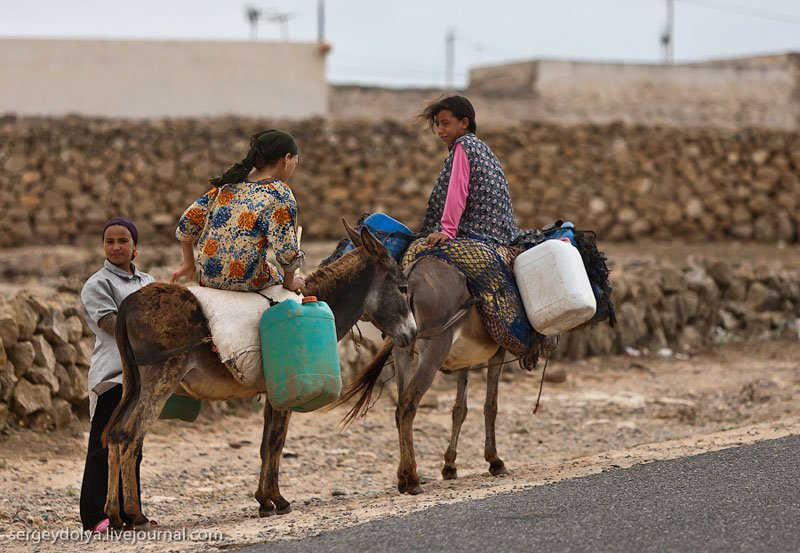 Гужевой транспорт в Марокко / Фото из Марокко