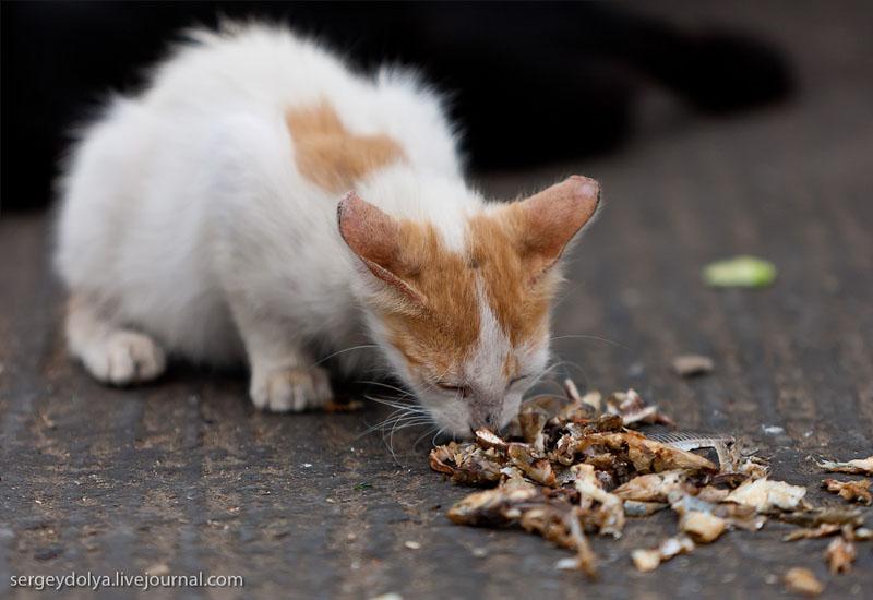 Кошка в Агадире, Марокко / Фото из Марокко