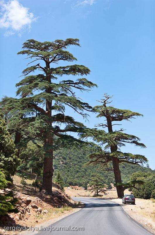 Деревья в Атласских горах / Фото из Марокко