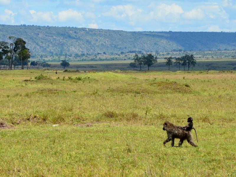 Сафари по национальному парку Масаи-Мара, Кения / Фото из Кении