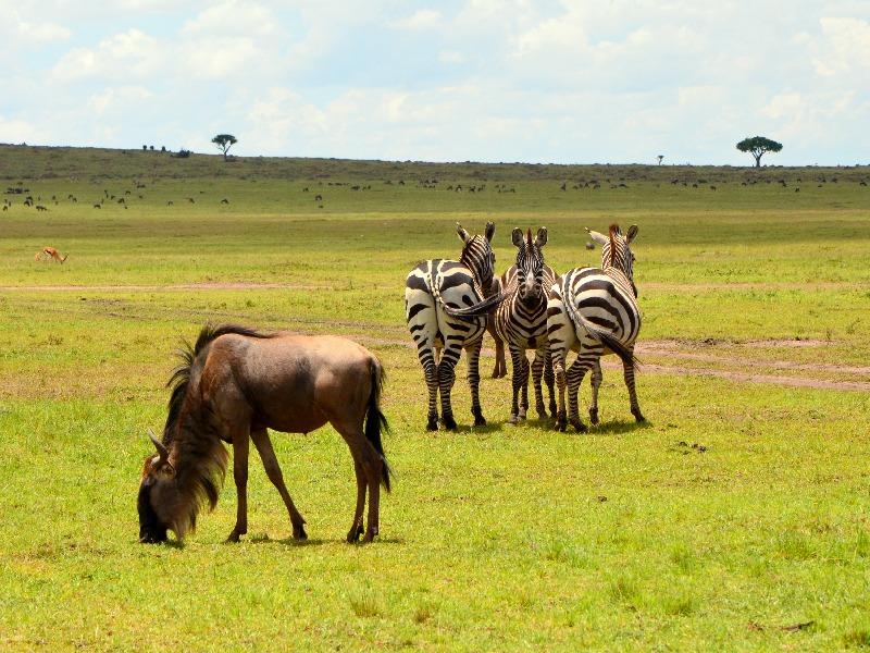 Животные в национальном парке Масаи-Мара, Кения / Фото из Кении