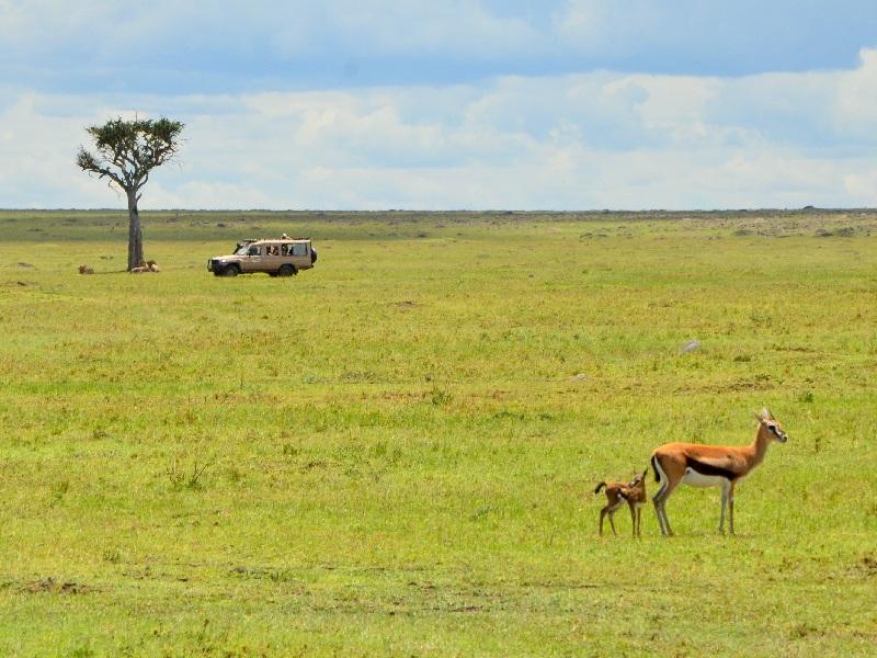 Газели в национальном парке Масаи-Мара, Кения / Фото из Кении