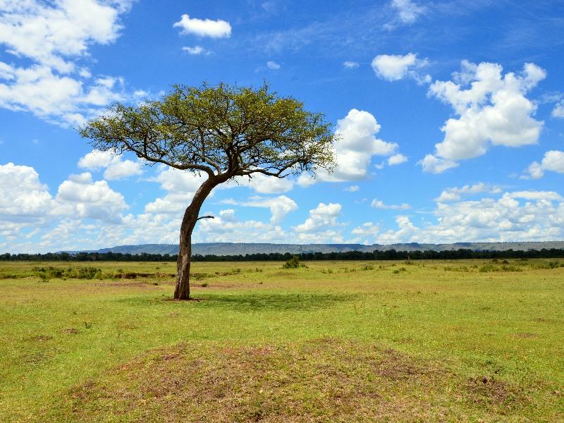 Пейзаж парка Масаи-Мара, Кения / Фото из Кении