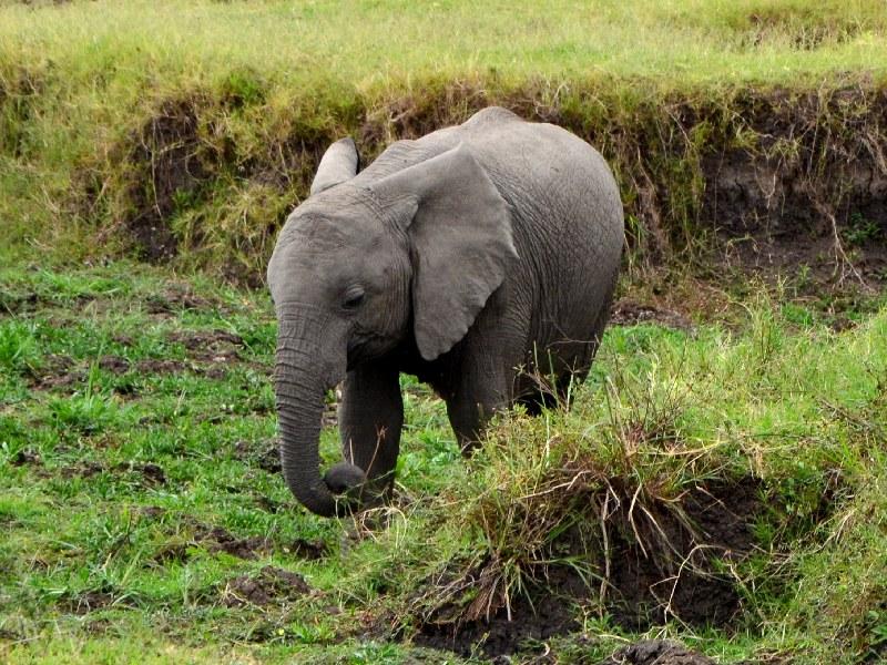 Слон в Кении / Фото из Кении