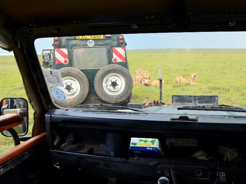 Львы у машины с туристами в национальном парке Масаи-Мара, Кения / Фото из Кении