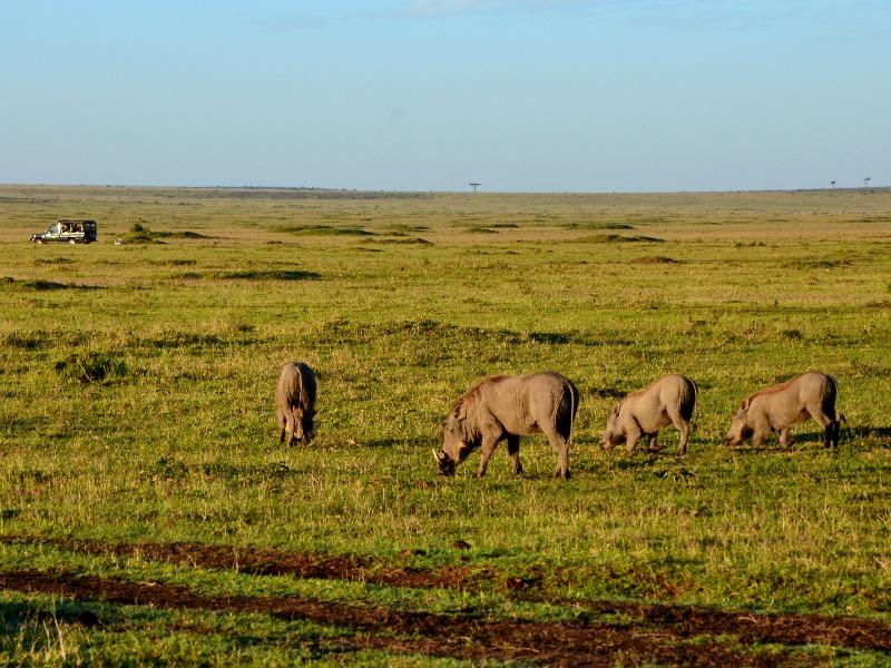 Утреннее сафари в национальном парке Масаи-Мара, Кения / Фото из Кении