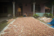 Повсеместно сушат лук / Индонезия