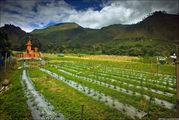 Оранжевый склеп / Индонезия