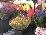 Букеты тюльпанов / Монако