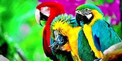 Зоопарк для попугаев появится в Чехии. // birdsgallery.net