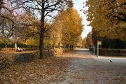 Осенние листья / Австрия