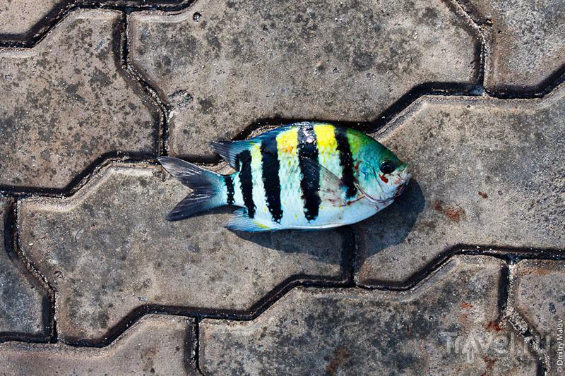 Разноцветная рыба с мальдивских рифов / Фото с Мальдив