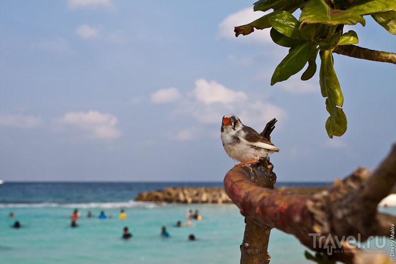 Пляж на Мальдивах / Фото с Мальдив