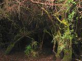 Тоннель сквозь заросли / Коста-Рика