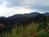 Плантации кофе / Коста-Рика