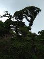Настоящие джунгли / Коста-Рика