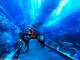 Самый большой аквариум / ОАЭ