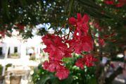 Буйство цветов / Испания
