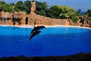 Дельфины в океанариуме / Испания