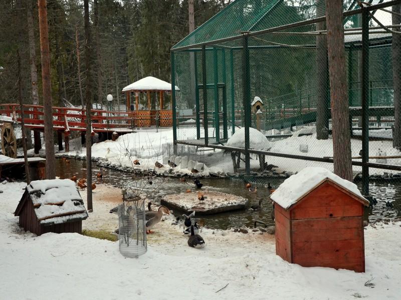Вольер с водоплавающими птицами / Фото из России