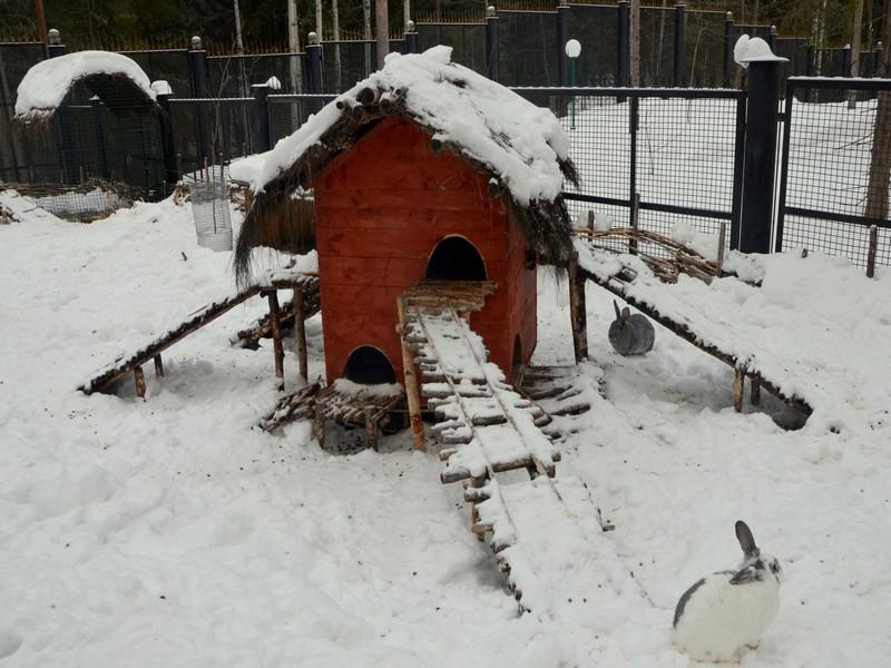 Кролики в зоосаде вотчины Деда Мороза / Фото из России