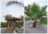 Пальмы и цветы / ОАЭ