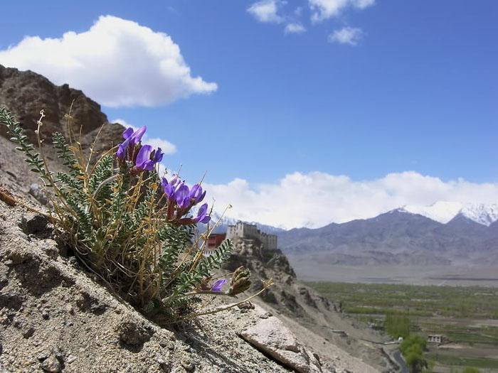 фото цветы в горах:
