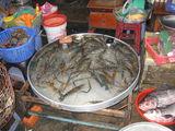 Свежие креветки / Вьетнам