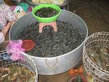 Мелкая рыба / Вьетнам