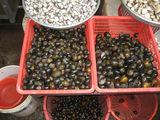 Разные моллюски / Вьетнам