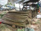 Сахарный тростник / Вьетнам