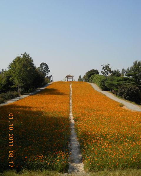 Олимпийский парк в Сеуле / Фото из Южной Кореи