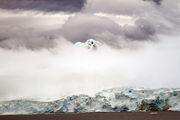Шельфовые ледники / Антарктика