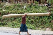 Переноска бамбука / Лаос
