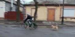 Дорожное движение / Украина