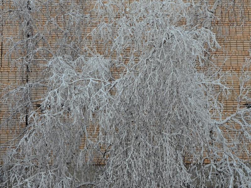 Покрытое инеем дерево в Якутии / Фото из России