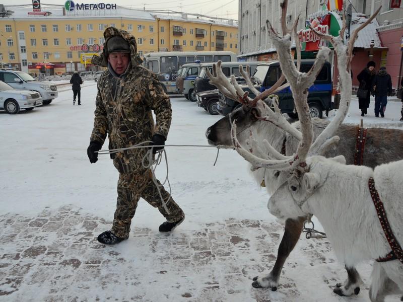Олени на улице в Якутске / Фото из России