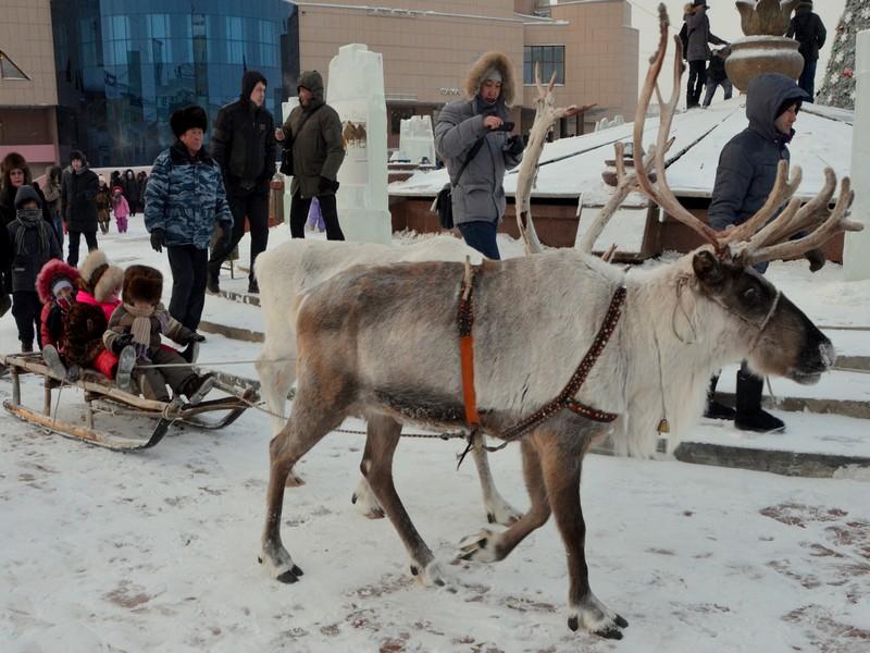 Катание на олене в Якутске / Фото из России
