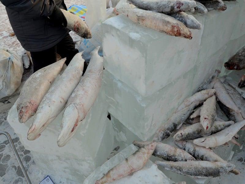 Рыба в Якутии / Фото из России