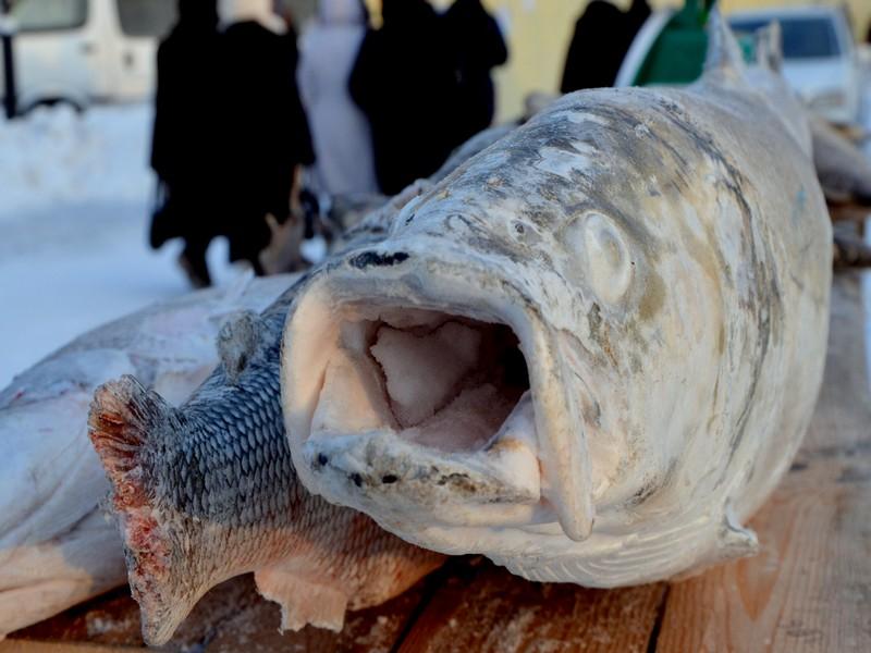 Замороженная рыба в Якутии / Фото из России