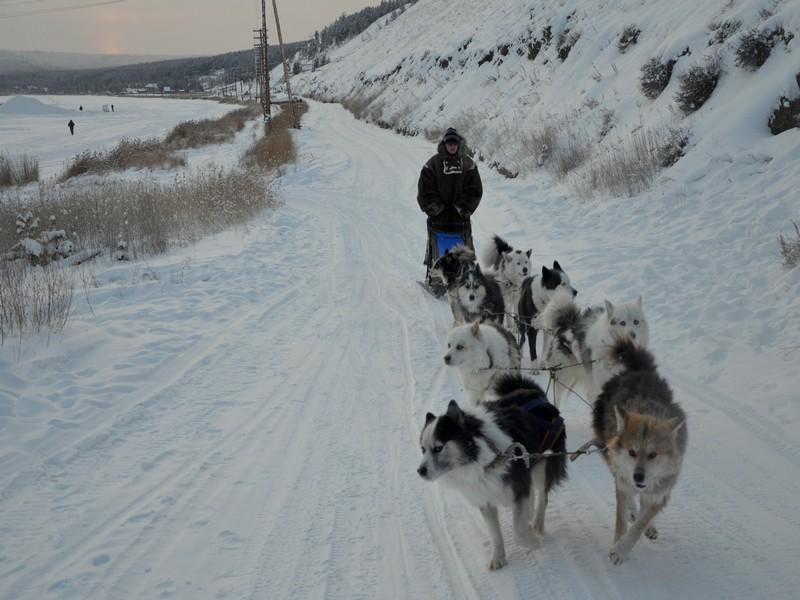 Ездовые собаки в Якутии / Фото из России