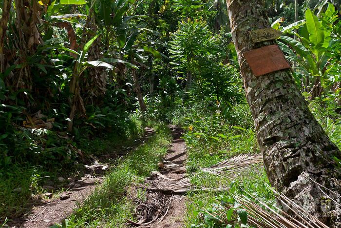 Природа острова Хива-Оа / Фото из Французской Полинезии