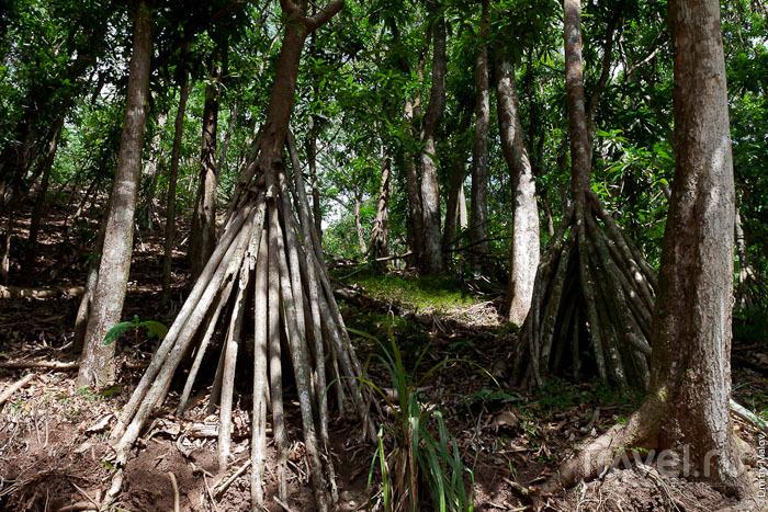 Джунгли на Маркизских островах / Фото из Французской Полинезии
