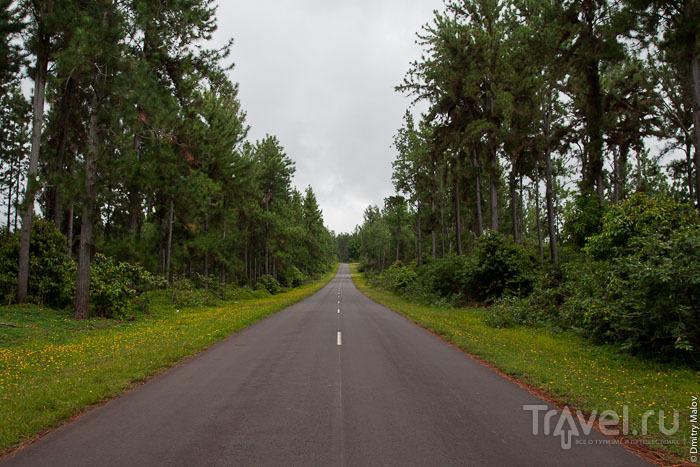 Дорога на Маркизских островах / Фото из Французской Полинезии