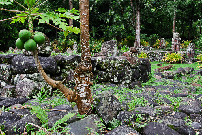 Флора Маркизских островов / Фото из Французской Полинезии